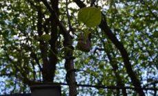 Ядовитые пауки появились в парковых зонах Нижнего Новгорода